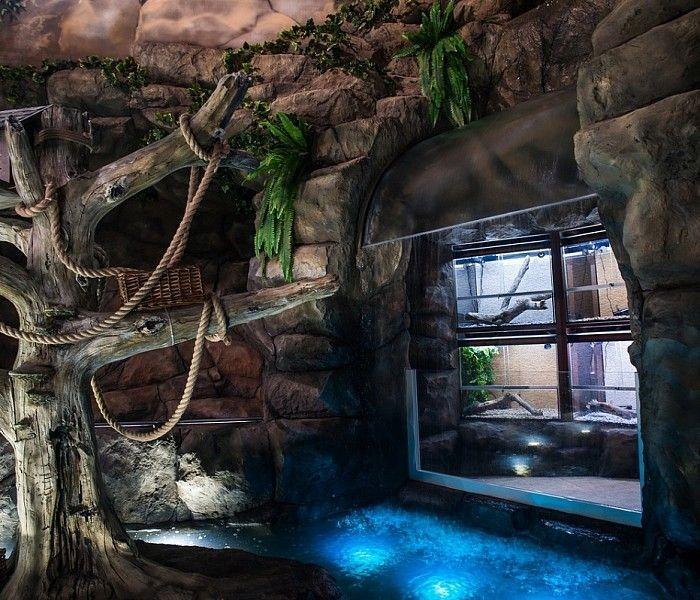 В экзотариуме Тулы открылась фотовыставка обитателей тропических лесов